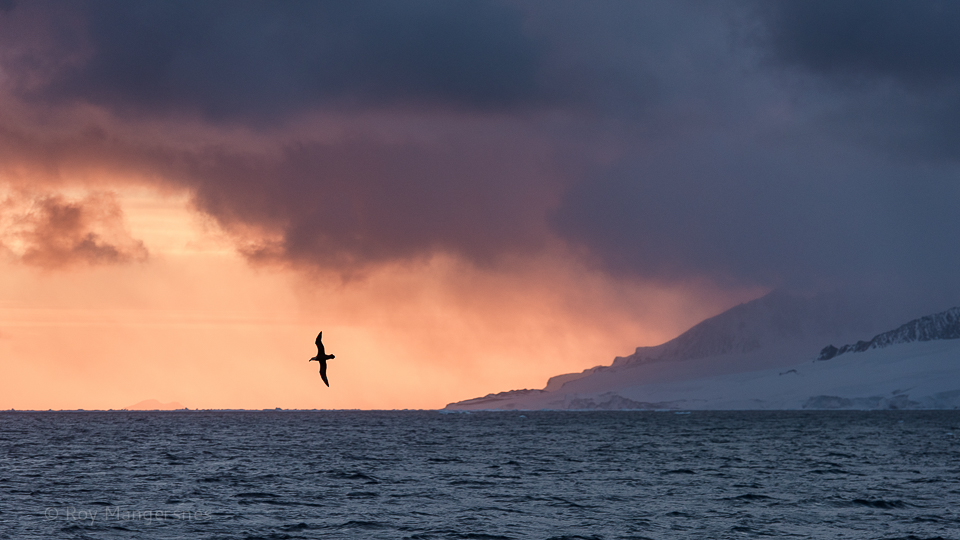 Giant stormpetrel at night - D810, 70-200mm, 1/500 sec, f/5,6 @ ISO 500