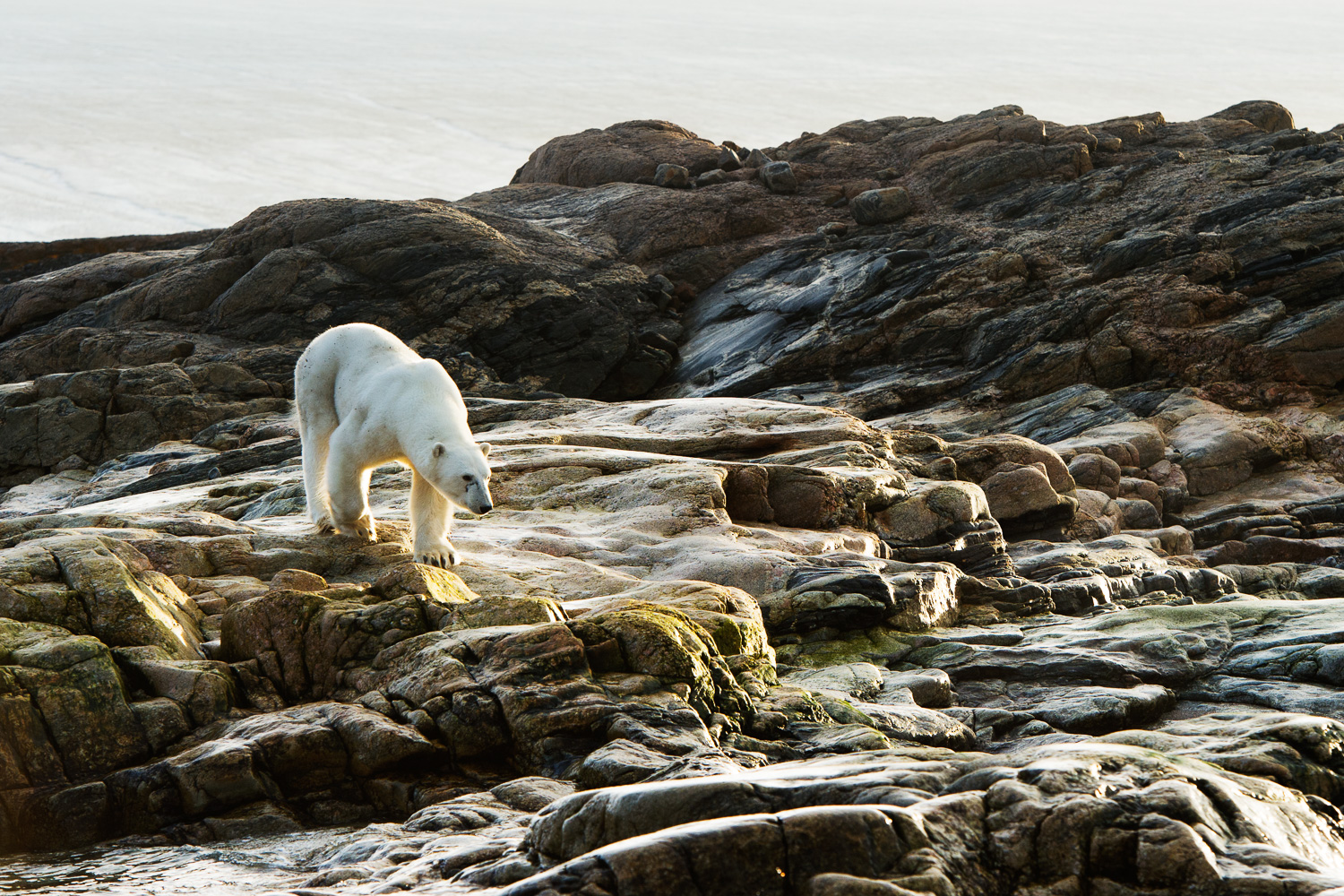 Copyright: Polar Bears & Humans project / Ole J Liodden